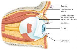 Liana Engelbrecht Optometrist Newcastle KZN